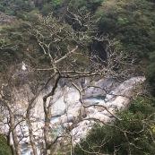 Taiwan gorge + tree