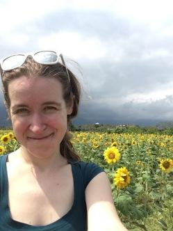 Taiwan sunflowers